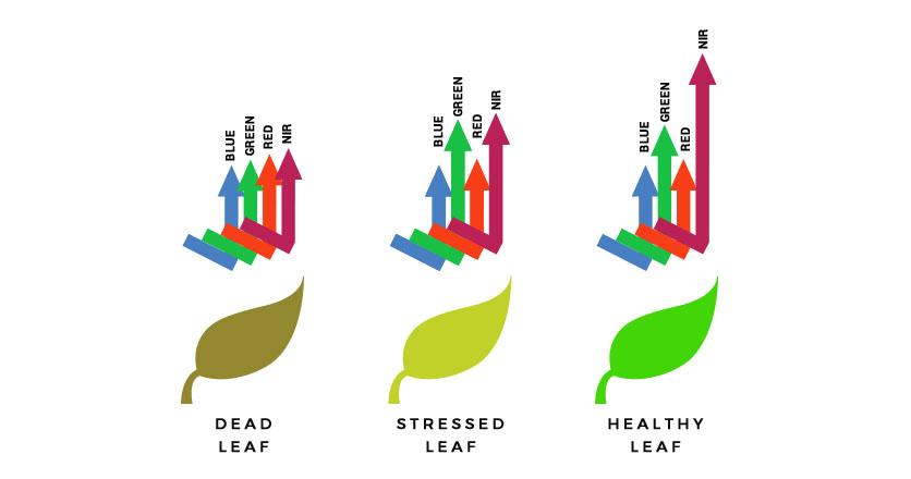 dead leaf, stressed leaf, healthy leaf